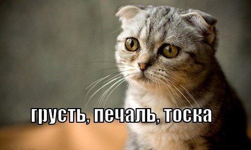 Грустный котик с подписью