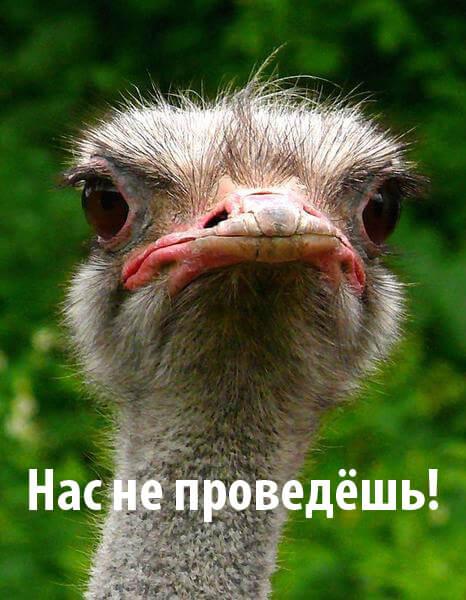 Фотография страуса с подписью
