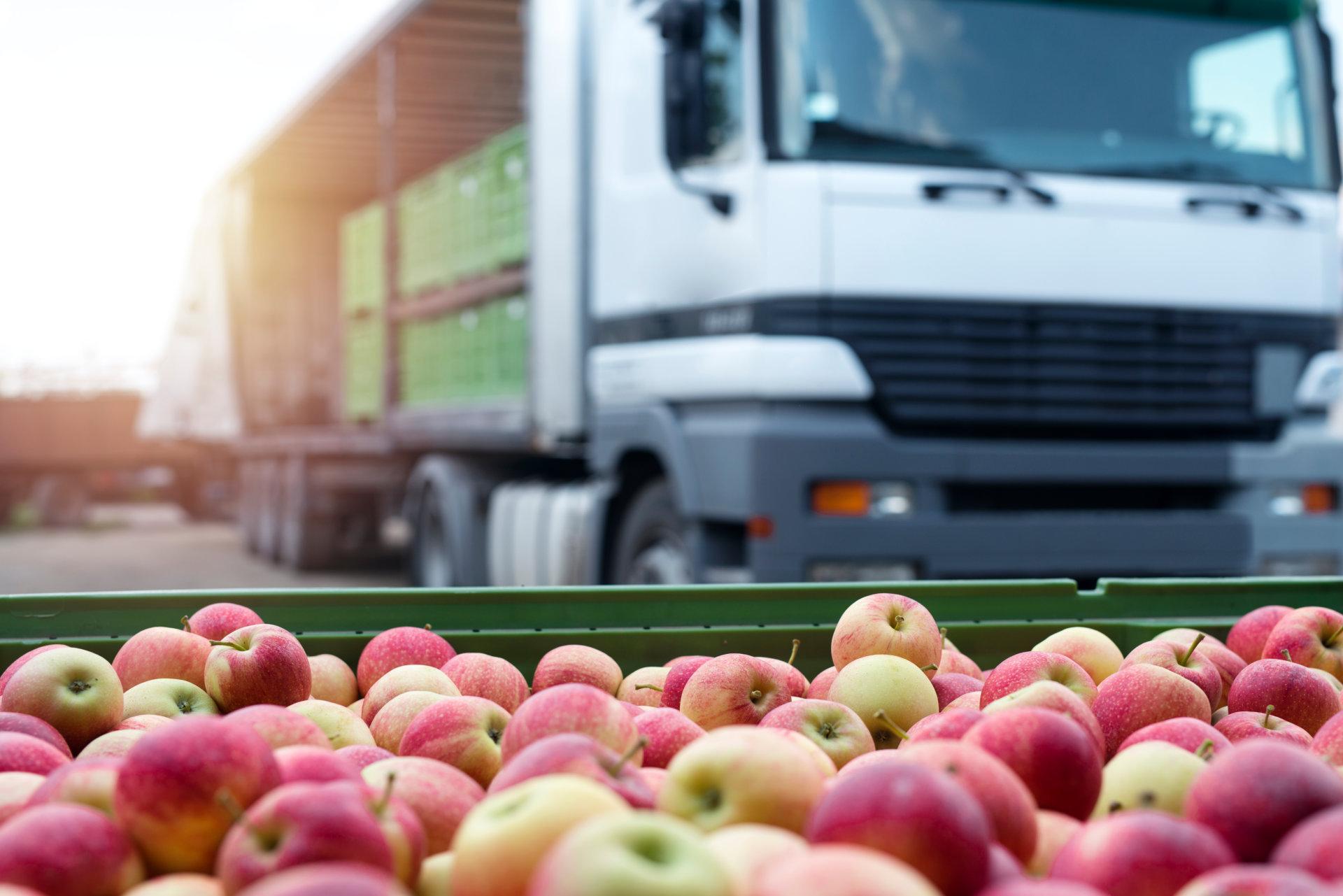 Кейс: Продвижение сайта по продаже еды оптом